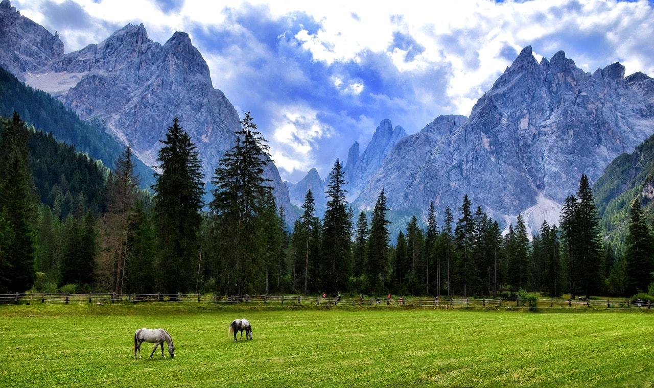 סוסים באלפים
